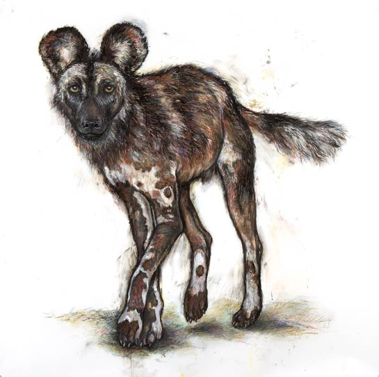 <em>African Painted Dog II</em>, 2005, Mixed Media/Drafting Film, 42 x 42""