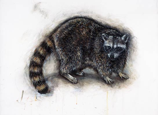 <em>Raccoon</em>, 2003, Mixed Media/Drafting Film, 32 x 42""