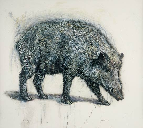 <em>Feral Pig</em>, 2002, Mixed Media/Drafting Film, 39 x 42""