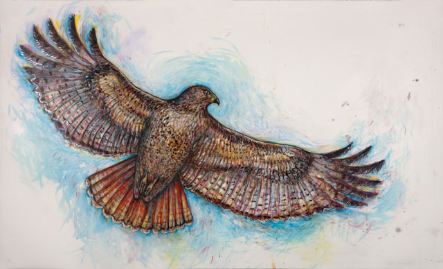 <em>Red-tailed Hawk</em>, 2014, Mixed Media/Drafting Film, 30 x 50""
