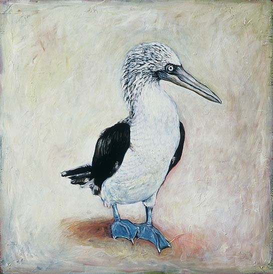 <em>Blue Footed Boobie</em>, 1999, Oil/Panel, 24 x 24""