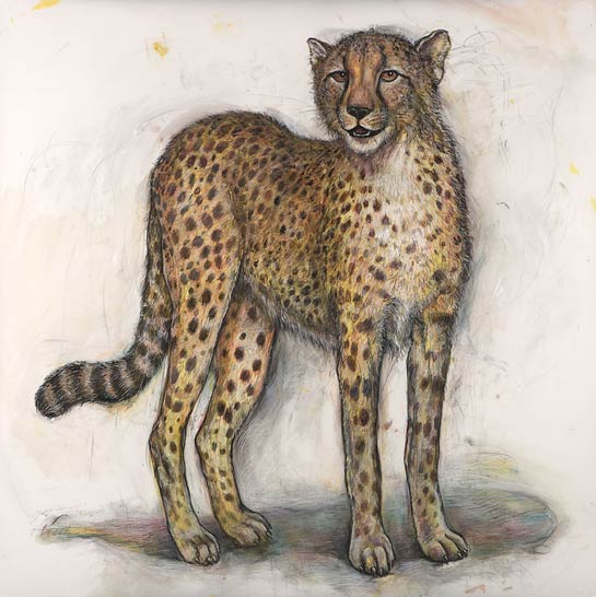 <em>Cheetah</em>, 2007, Mixed Media/Drafting Film, 40 x 40""