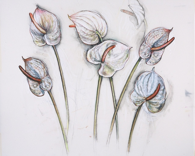 <em>Anthurium</em>, 2001, Mixed Media/Drafting Film, 36 x 42""