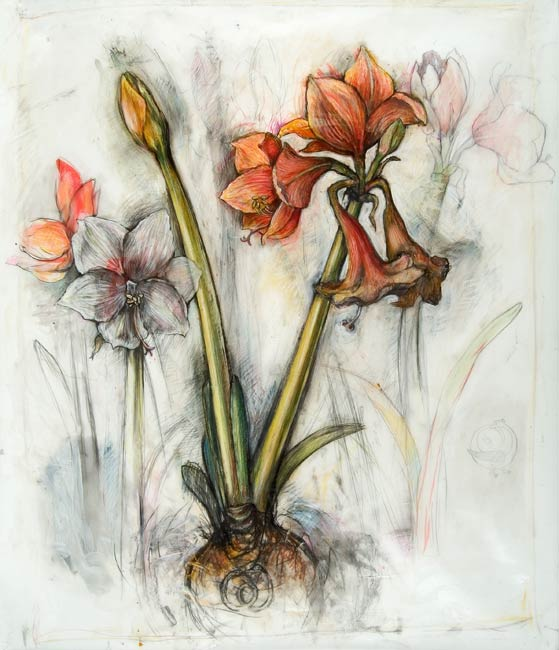 <em>Amaryllis</em>, 2004, Mixed Media/Drafting Film, 42 x 36""