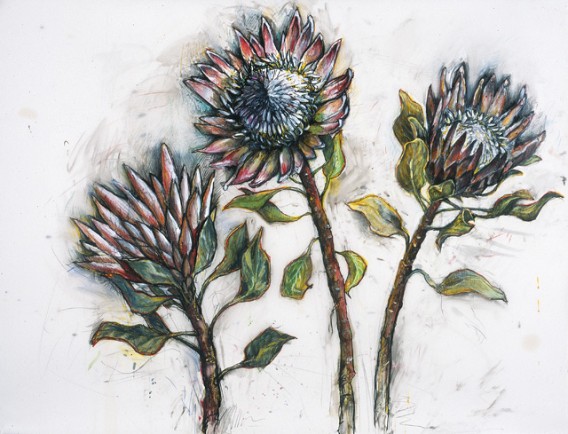 <em>King Protea</em>, 2003, Mixed Media/Drafting Film, 36 x 42""
