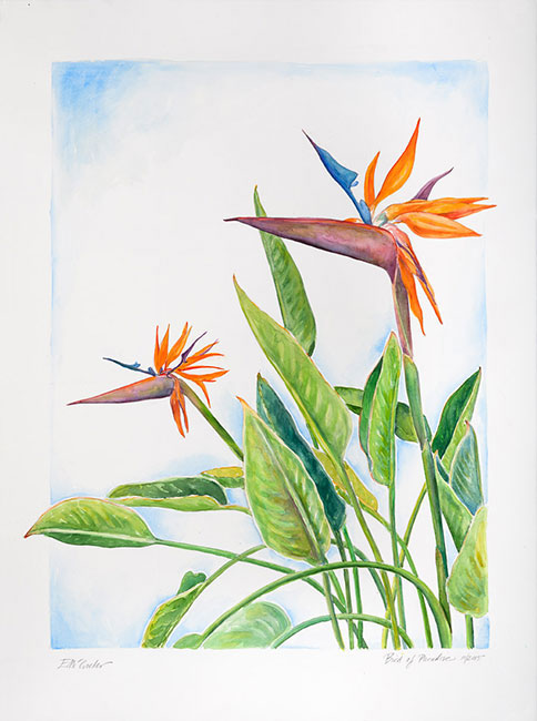 <em>Bird of Paradise</em>, 2015, Watercolor/Paper, 30 x 22""