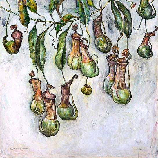 <em>Pitcher Plant (Sacred Geometries)</em>, 2008, Mixed Media/Clayboard, 30 x 30""