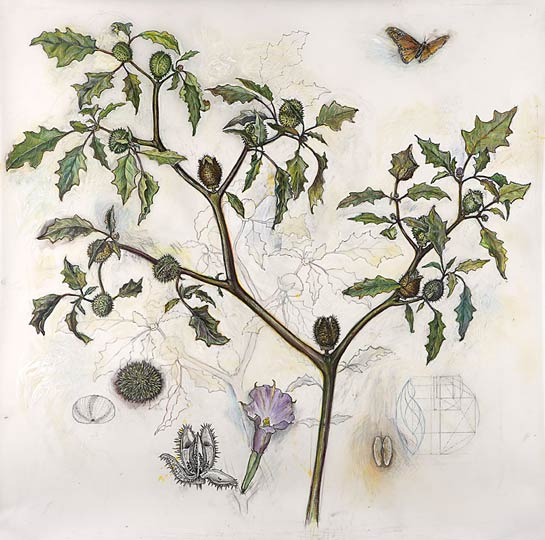 <em>Jimsonweed (Sacred Geometries)</em>, 2007, Mixed Media/Drafting Film, 41 x 41""