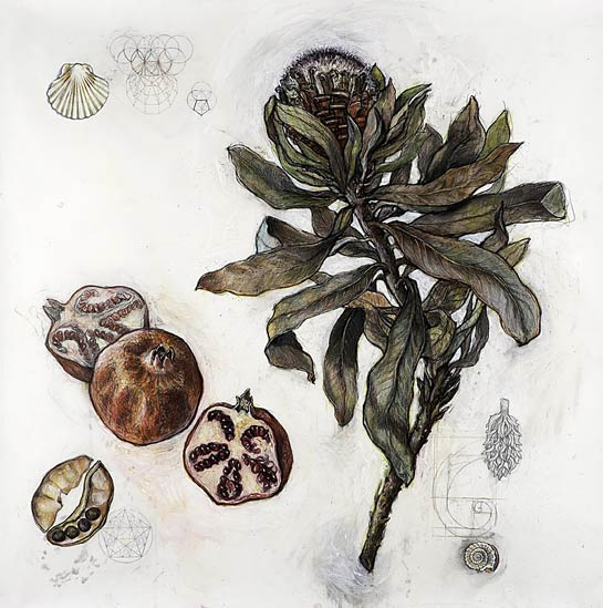 <em>Protea and Pomegranate (Sacred Geometries)</em>, 2007, Mixed Media/Drafting Film, 40 x 40""